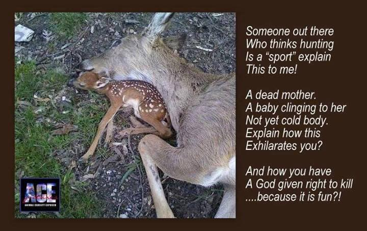 Hunting is evil. #hunting #animalwelfare #AnimalRights #nature #AnimalCruelty #fawn #doe #inhumane http://t.co/UtS8Oh7kM4