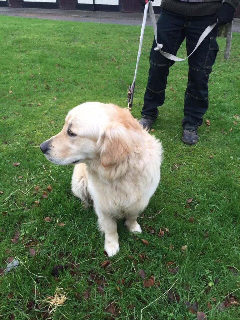 Lost dog alert! Athgarvan area. A beautiful male golden retriever was found this morning, lets find his family Pls RT http://t.co/XjI7JzxBSt