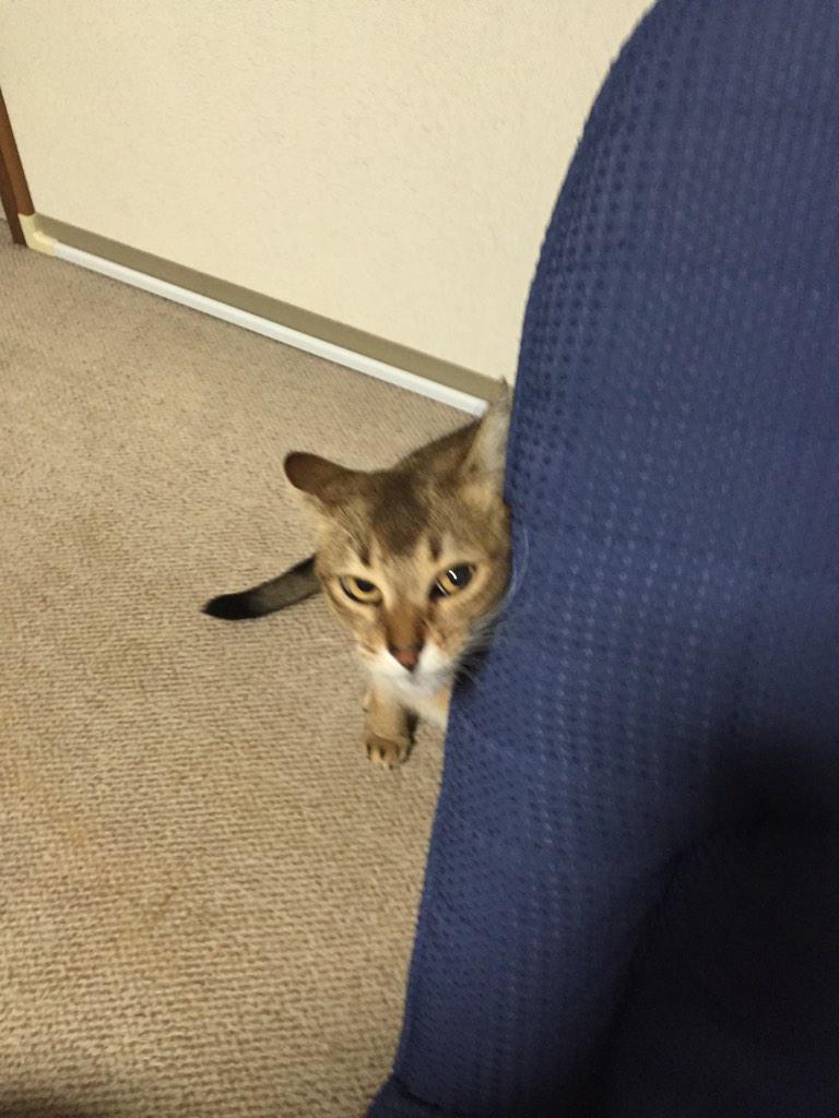 中島みゆきが歌い出してからネコが激しく反応した。ソワソワしてる http://t.co/hajTyUzh4q