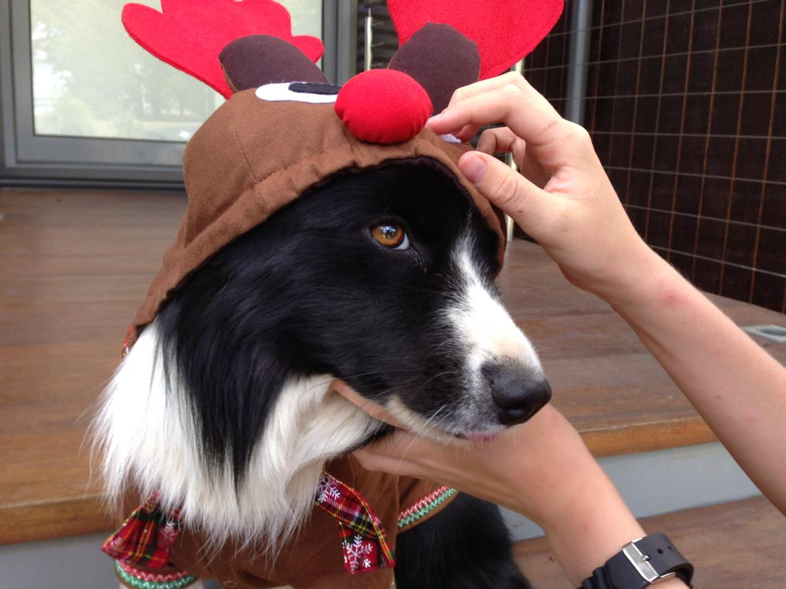Last night our Border Collie RUBY went AWOL in Nillimbuk area. She still hasn't returned. If sighted pls contact me. http://t.co/JMuShSutPA