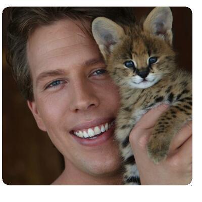 Een tijger die met kittens speelt...