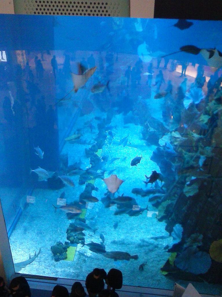 Fish aquarium in umm al quwain - Anis Ettehadulhagh On Twitter Desert Vacation Dubai Al Ain Um Al Quwain Zoo Aquarium Ferrari World Http T Co Ridjtwr7uh
