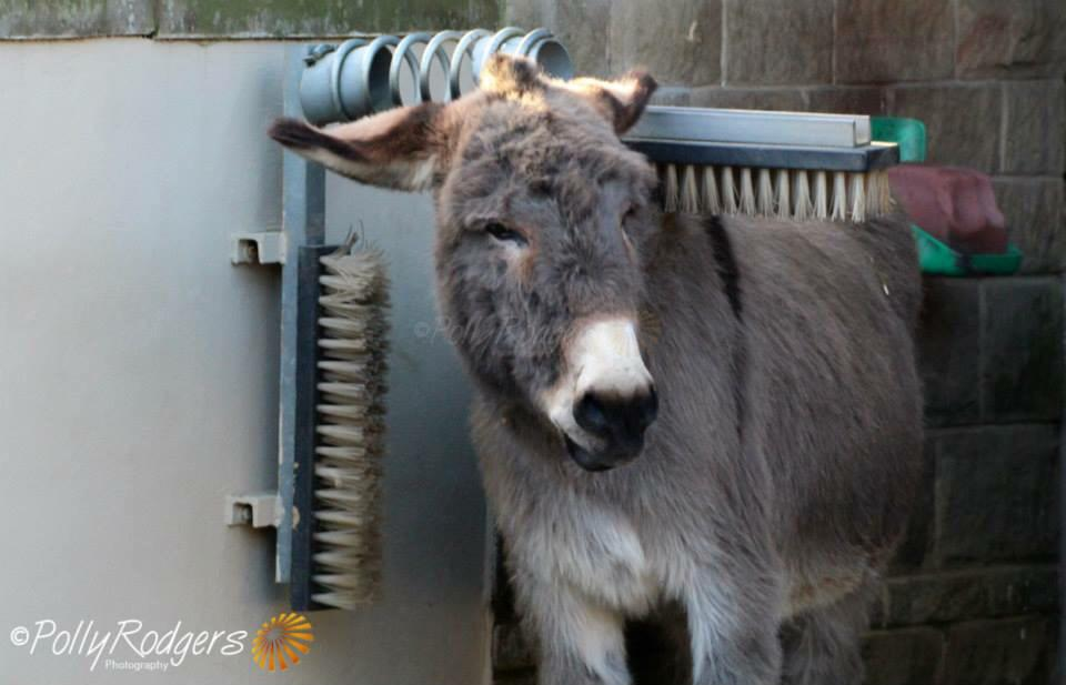 Morning all.... Here's HECTOR enjoying a good brush! #HappyDonkey