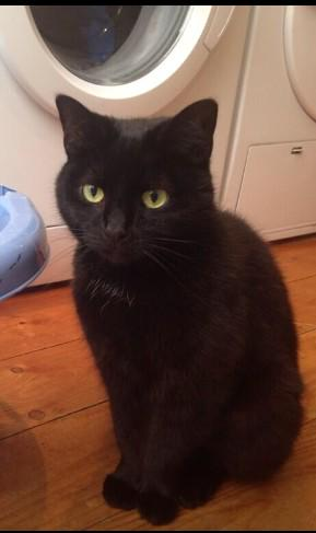 People of #Balham ... my cat Suki is lost. We went away for a bit - & so has she
