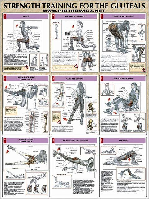 Muscle Transform on Twitter: \