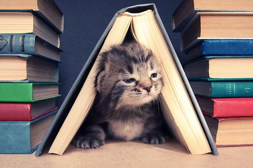 Meow…  I read:)