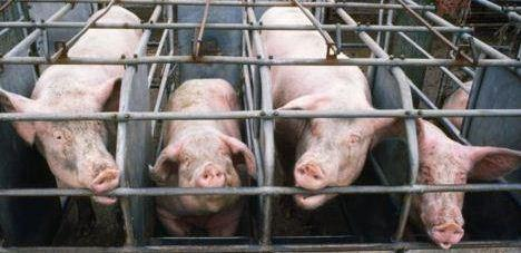 Chris Christie may be celebrating w/ Jerry Jones, but millions are still upset he vetoed pig protection bill in #NJ http://t.co/iHdUDIVstU