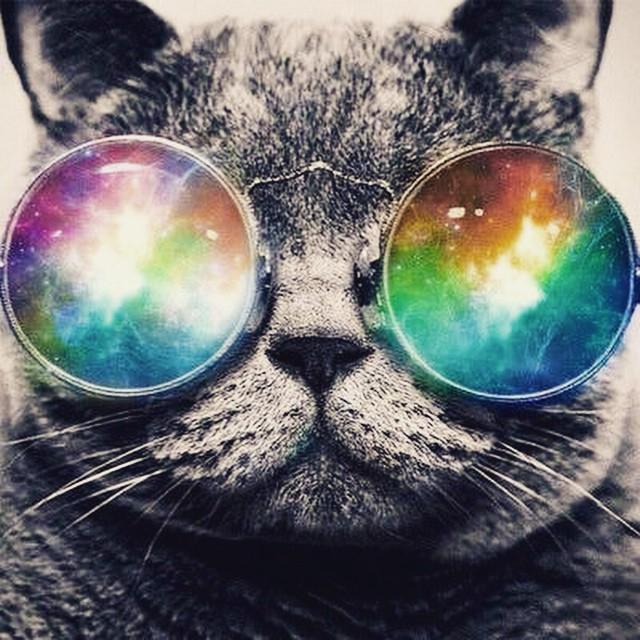 "elmira Instagram on Twitter: ""#trippy #cat #sunglasses at ..."