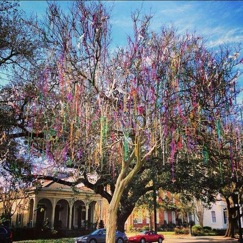 Time for bead trees and king cake! Carnival season is officially underway! Photo via @nolajess81!  #NOLA #MardiGras http://t.co/hxZkEh7auY