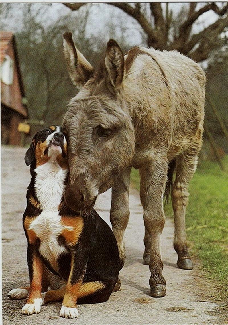 """@Lou_140703: http://t.co/S9bfrx10g0""  Best buds!! #dogs #donkeys #friendship"