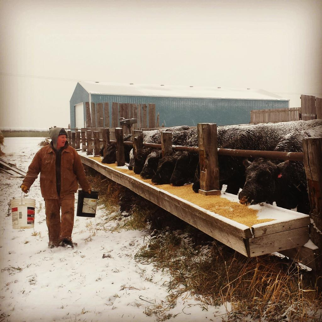 These cattle r fed and taken care of every day. 1 day they'll serve their purpose of feeding local families #farm365 http://t.co/Ec69uRR3YR