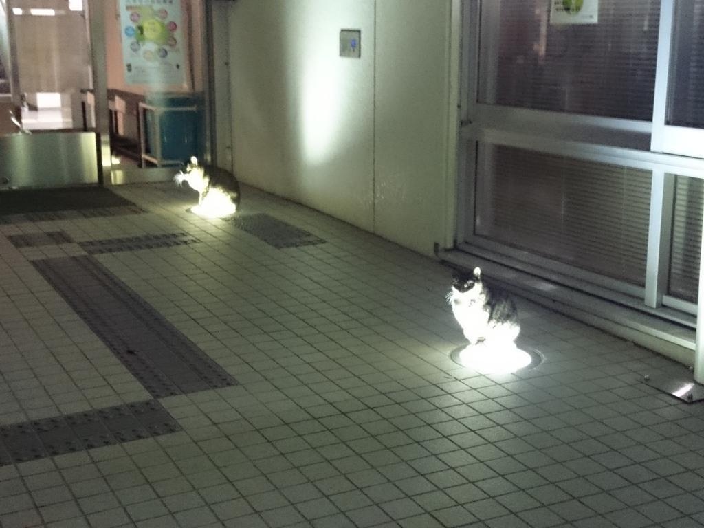 帰りにネコがライトで暖とってる現場に遭遇した。可愛いw pic.twitter.com/JQHMqfvhGr