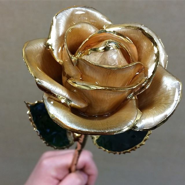 I Hate Steven Singer On Twitter Check Out Our NEW Butterscotch Gold Dipped Rose Tco VBqhDuIcsa Ihatestevensinger 2k4z6nkHSD