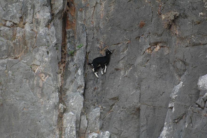 """""""@db_deadbeat: im not even sure goats actually use physics http://t.co/bL1FgM70l1"""" < lol // @mfdii @jonisick"""