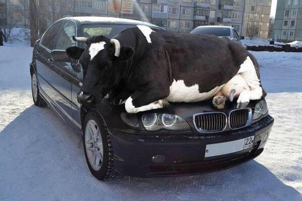 חברים, בימים הקרים האלה חשוב לזכור שיש בעלי חיים שמנסים להתחמם מהמנוע של הרכב. כולנו בודקים לפני שנוסעים!! http://t.co/mD40d85FaG