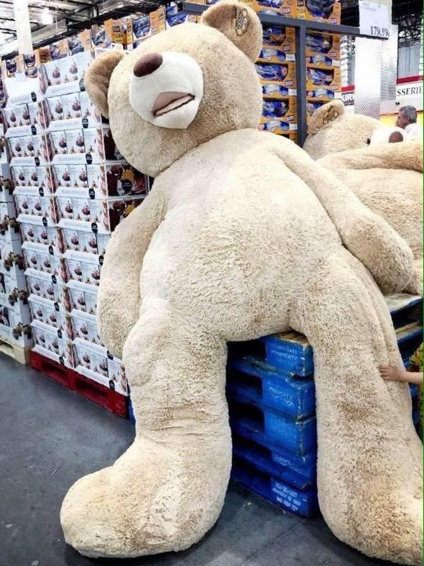 M A N D A On Twitter Someone Buy Me A Big Teddy Bear For