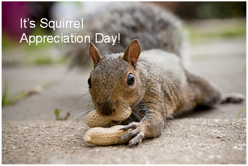 Happy #SquirrelAppreciationDay, peeps! Of course, that's every day for me! http://t.co/DG7EjIqZR8