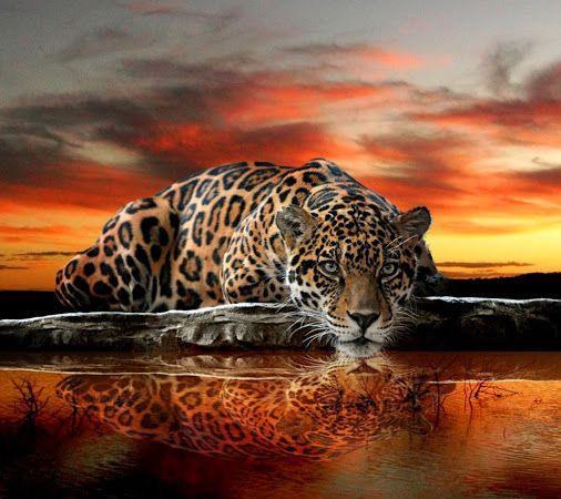 CACHORROS Y ANIMALES B76scL8IIAQuyfy