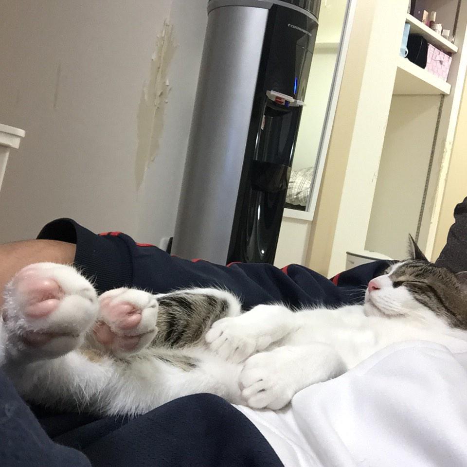 とら丸が優雅に寝てるせいで僕は寝れません。 pic.twitter.com/QknI63HbaY