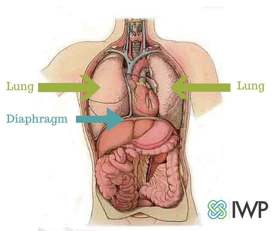Lance Breger On Twitter Deep Breaths Help Diaphragm Squeeze