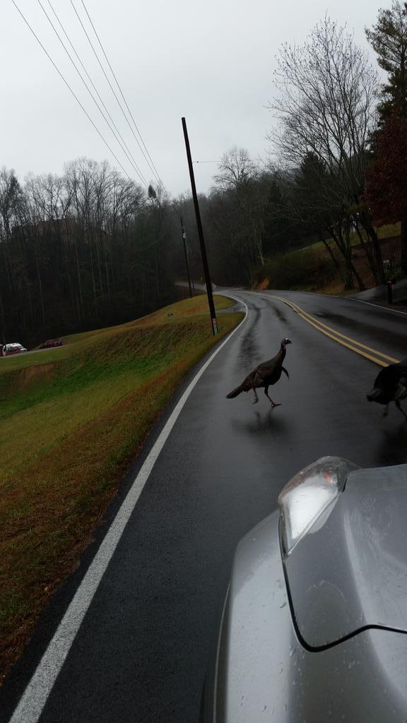 Turkey crossing the road.  #playing chicken #seviervillerealestate pic.twitter.com/w84ZbtDfr3