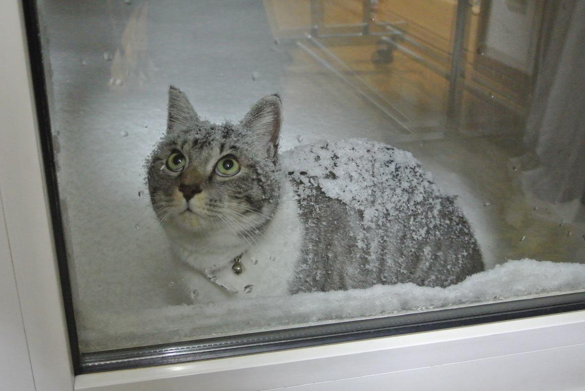 雪の積もる青森で、毎日会いに来るネコが話題に!!