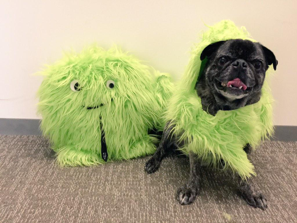 Meet Wally! Our newest Yeti is taking over the office today in honor of #DressUpYourPetDay #YetiPug http://t.co/7YmOC4hvYD