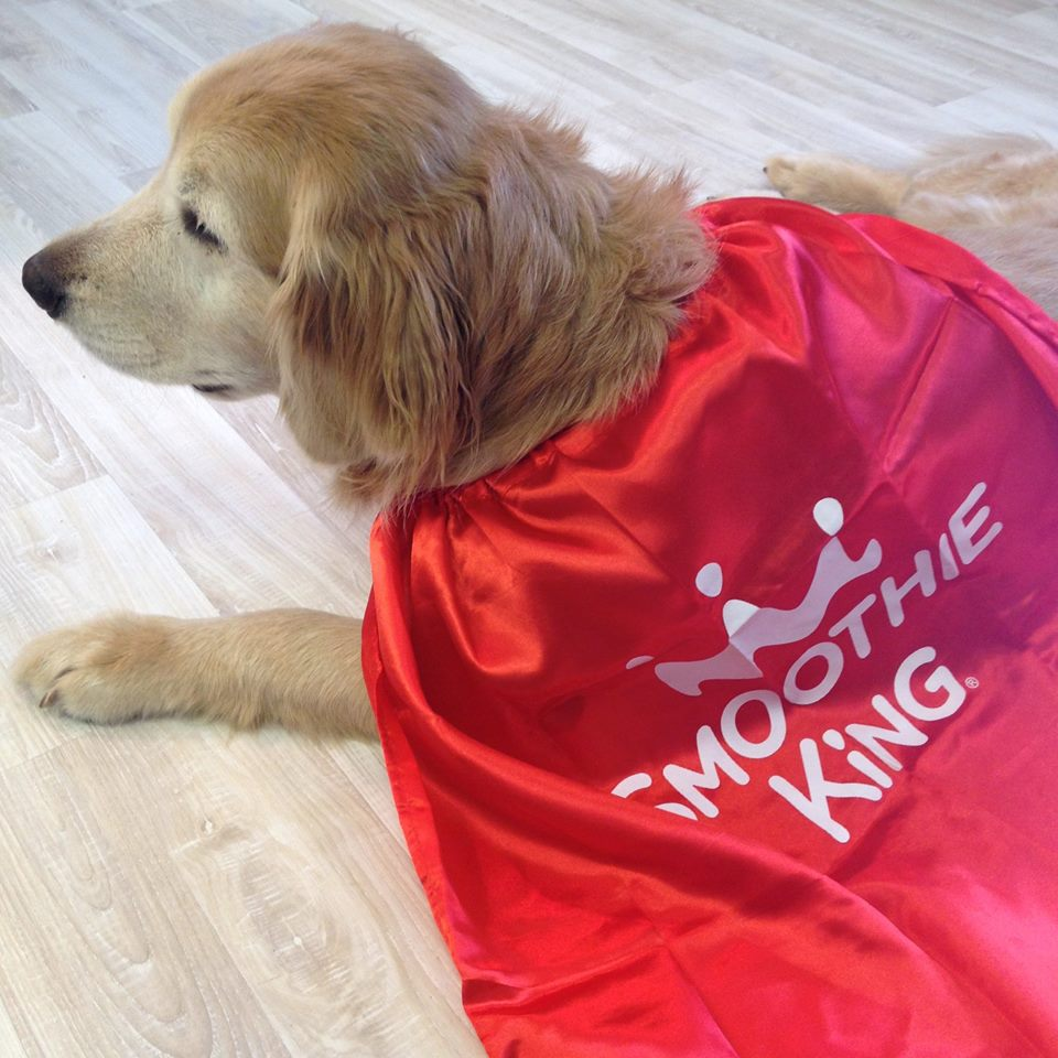 Are you a #SmoothieKing superfan? RT for the chance to win an exclusive cape for your pup! #dressupyourpetday http://t.co/nCprjvvnti