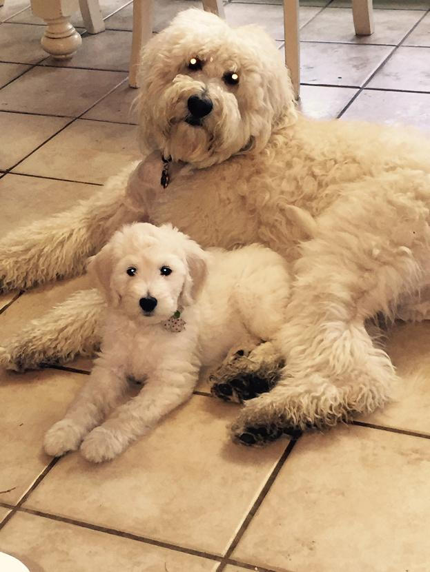 Not my dogs but I wish they were