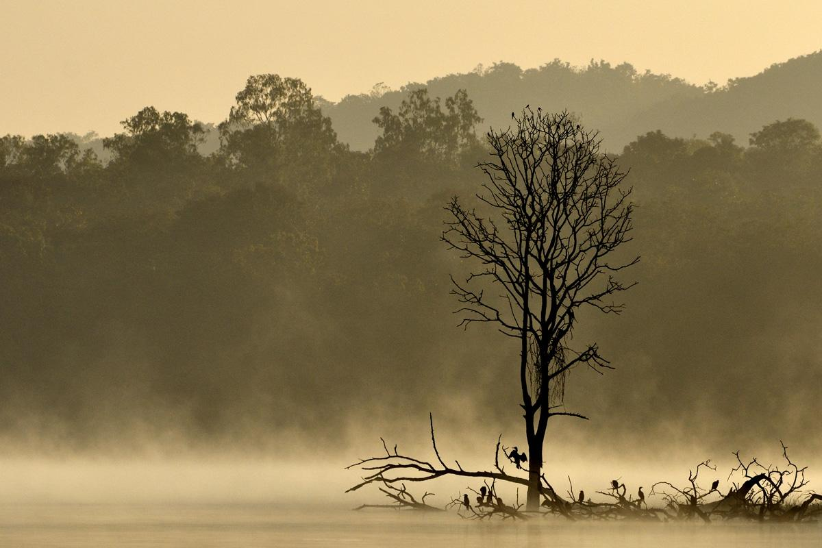 Do you like photographing trees? The #neralu photo project is for you. http://t.co/rZJ59z8lzn @NeraluFestival http://t.co/Ru4CjxYrf4