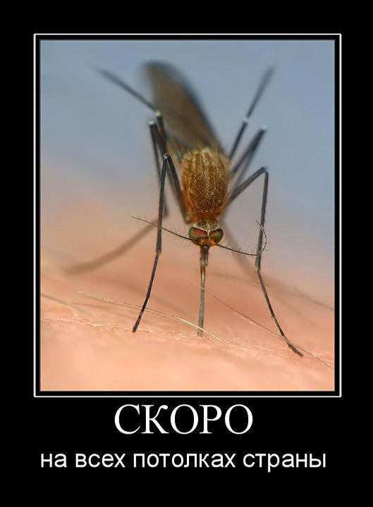 Комары прикол картинки, открытка прощенным
