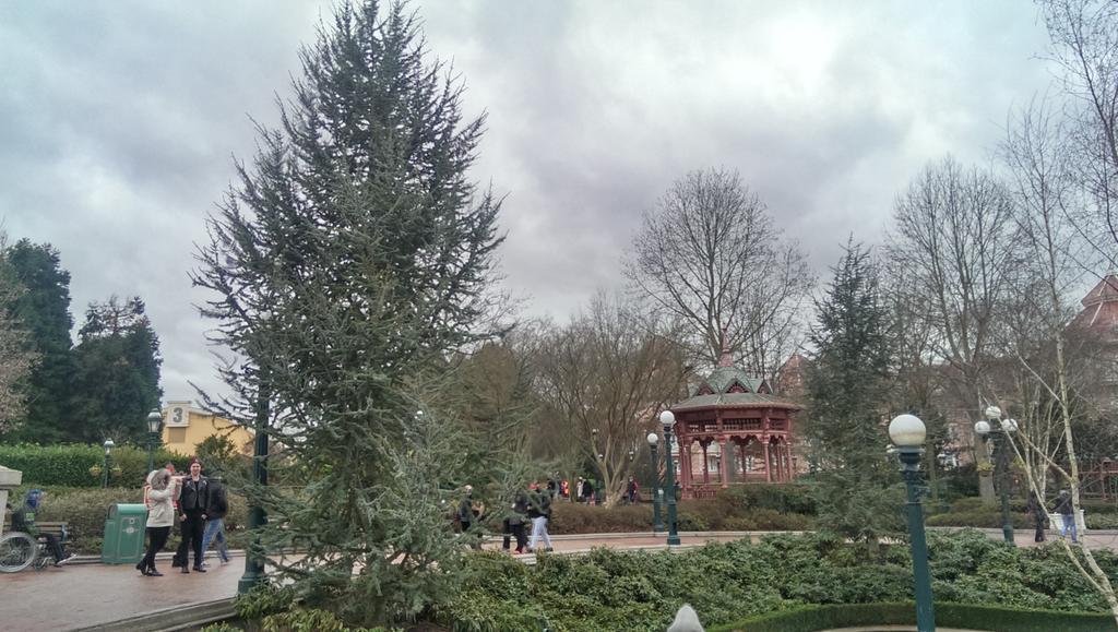 Remplacement des arbres à Disneyland Paris - Page 3 B7ZKO1XCAAAju70