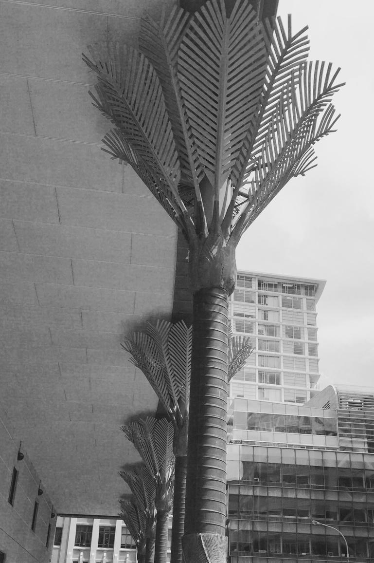 Nikau colonnade at the Library, with the Chews Lane precinct in the background. #athwalk http://t.co/8CYZpvgqLP