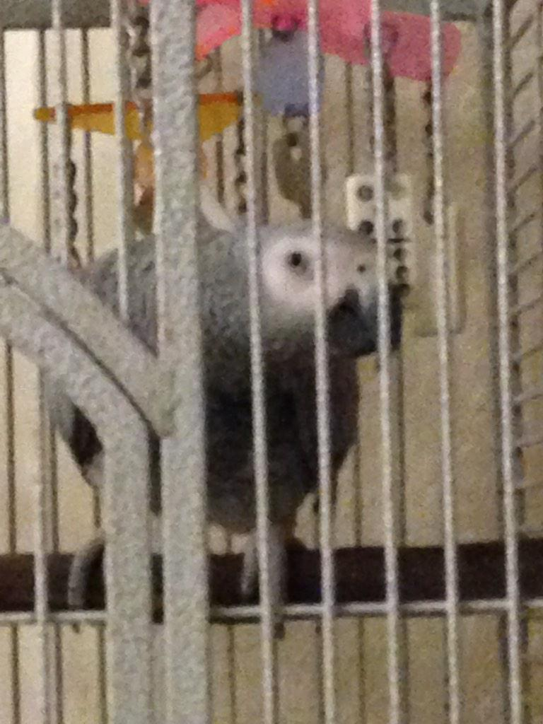 """""""@SteveBothamley my parrot Jesse is a good talker, most of which is not suitable for Twitter http://t.co/Opz3cYcGdv"""" do a vine thing?"""