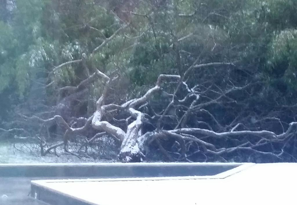 My poorly broken favourite #mulberry  tree this morning.... Naughty wind and snow #LoggingJobToday x http://t.co/IwO08Nq6kc