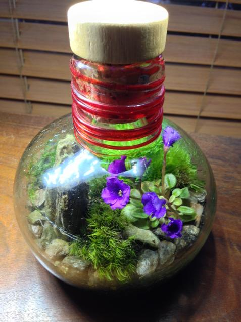My Plant Doctor On Twitter Small Closed Terrarium With Blooming