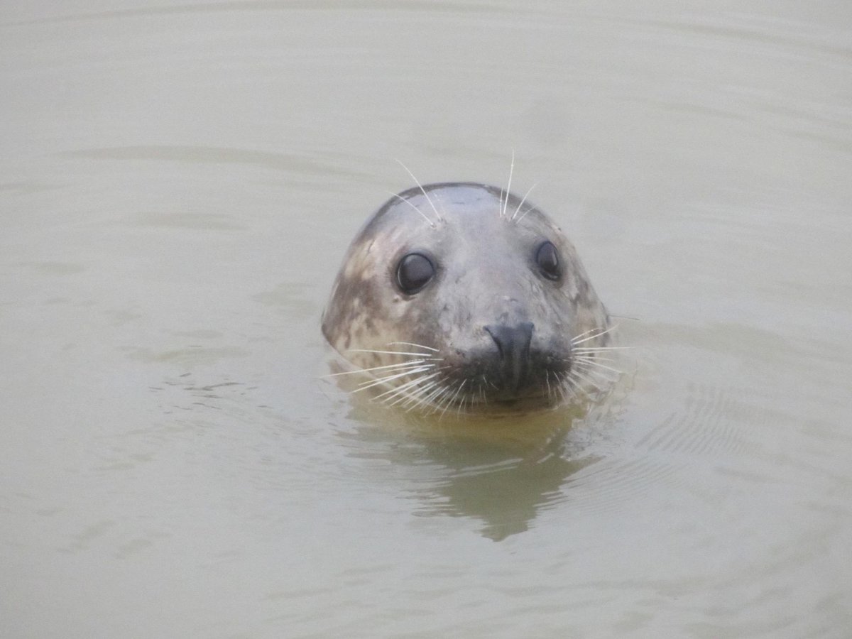 Seriously unexpected marine mammals are being spotted in the River Thames