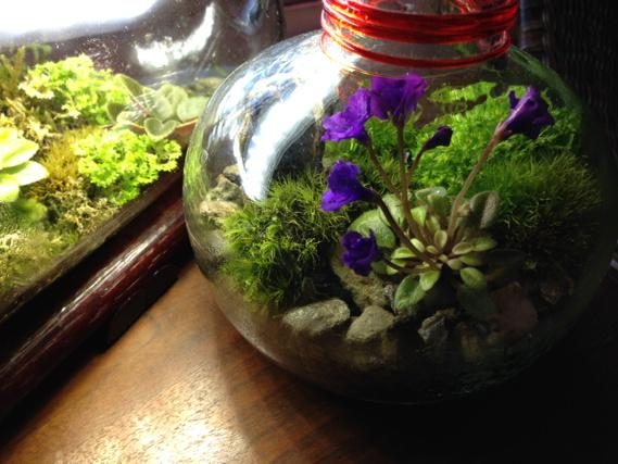 My Plant Doctor On Twitter Pic 2 Small Closed Terrarium With