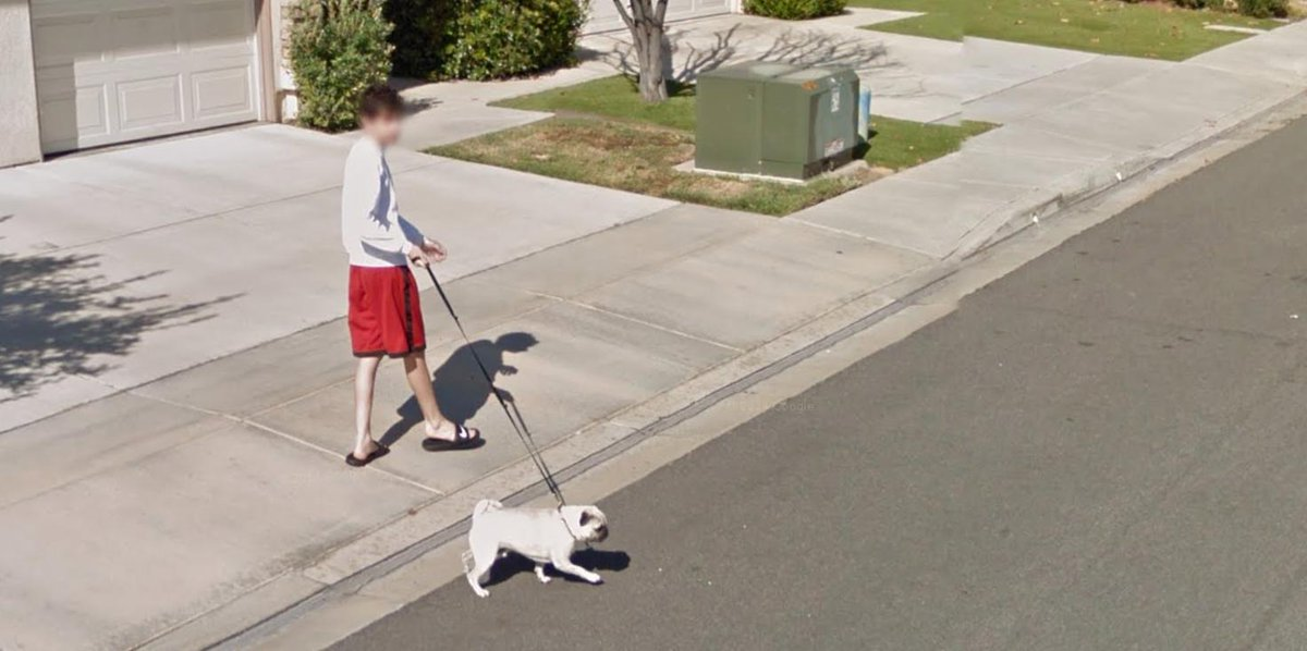 Rug On Twitter Quot Me Casually Walking My Dog On Google Maps