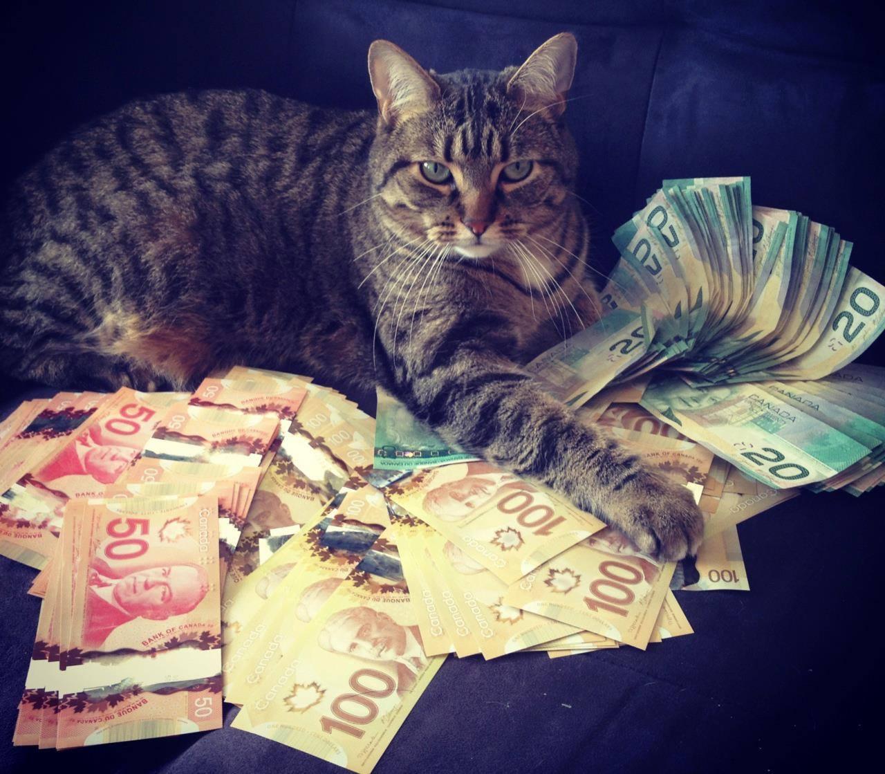 Картинка деньги смешные картинки
