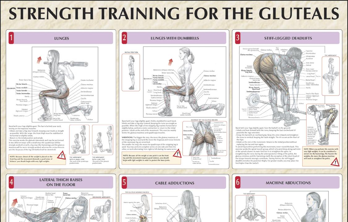 A Health Blog On Twitter Strength Training For The Glutes Chart