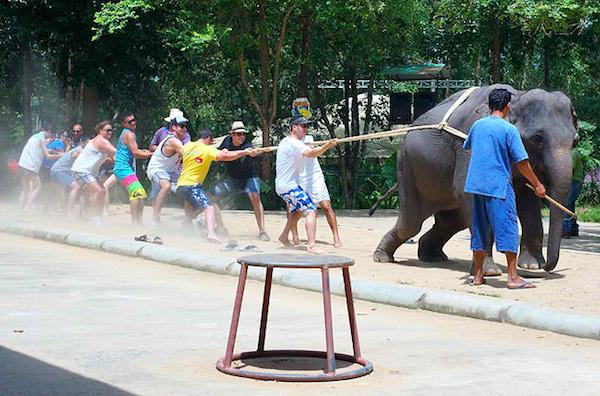 @joannakrupa EXPOSED! Namuang Safari Park: A Place for Adventure or Animal Abuse? http://t.co/SxvwjPfSNW #cruelty http://t.co/9kkTIwTwrs""