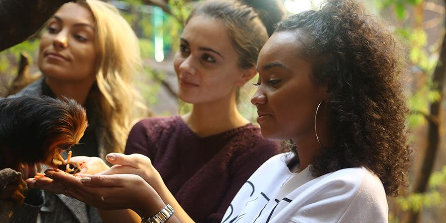 Our tamarin made a new friend today when the lovely Leigh from @LittleMix came to visit #MeettheRainforest http://t.co/IXJ6iWqQhH