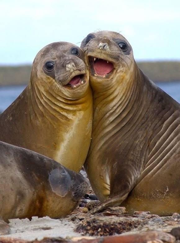 Добрый, картинки морских животных смешные