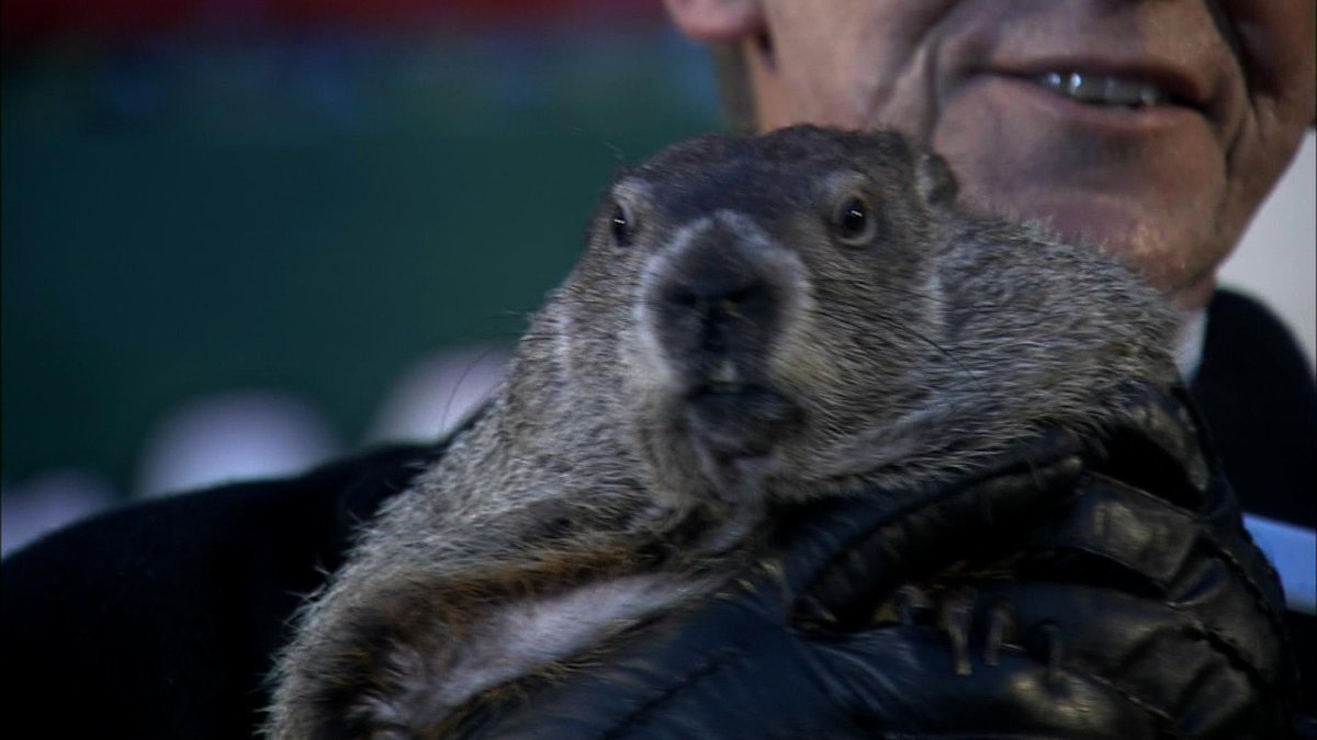 Just in: #PunxsutawneyPhil sees his shadow #SixMoreWeeksOfWinter http://t.co/PBqLLoOzS3