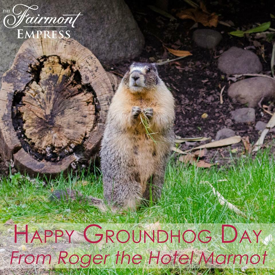 Happy #GroundhogDay! Roger has assured us that we will have an early spring in #yyj. http://t.co/nsWkAuJg3T