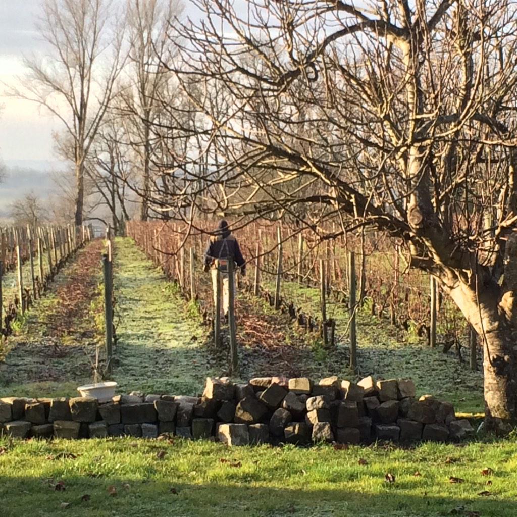 here we go! #pruining #merlot #CabernetFranc vines // #tailler + tirer les bois #Bordeaux #ClosMonicord<br>http://pic.twitter.com/nB0VIZopIh
