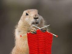 Sorry about that whole six more weeks of winter thing... I just wanted more time to knit! #groundhogday