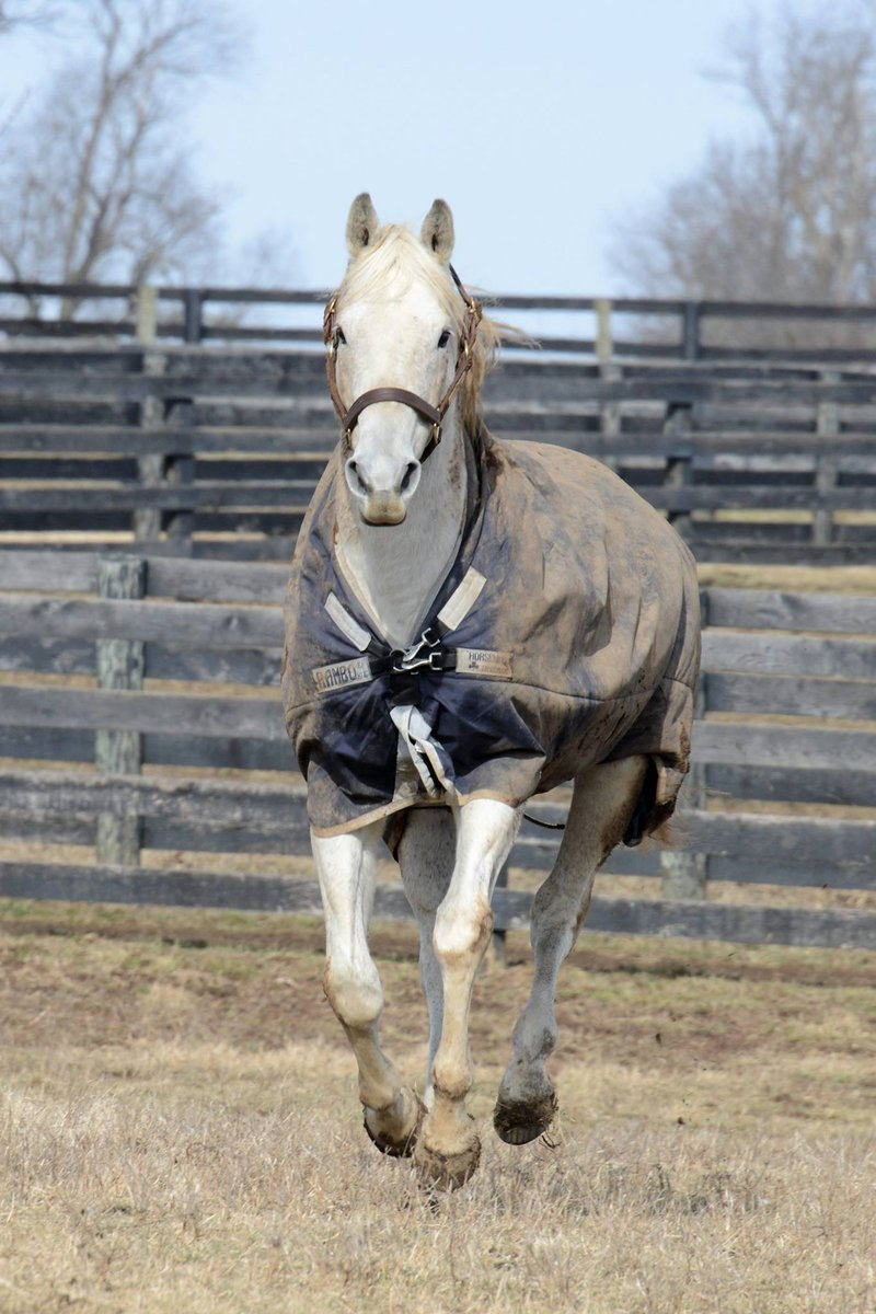Many thanx to Laura Battles & @Oldfriendsfarm for sharing this photo of the ageless wonder that is Silver Charm! xoxo http://t.co/yhvc0dYNZv