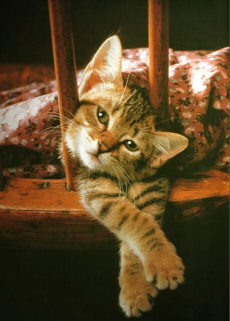 Картинки с котятами доброе утро любимая прикольные, телефон